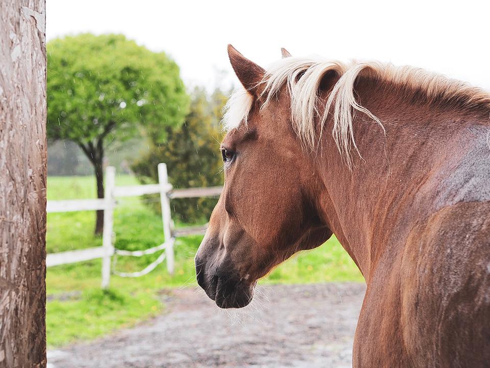 Hevoset kuuluvat lomituskohteiden suurimpiin asiakkaisiin